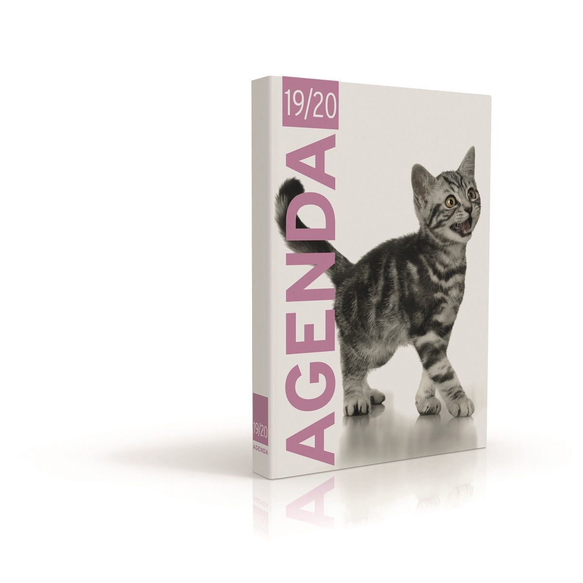 Agenda scolaire journalier 1er prix 320 pages 119x163cm chaton 2019 2020