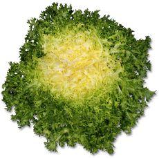 Salade frisée pièce 1 pièce