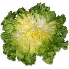 Salade scarole pièce 1 pièce
