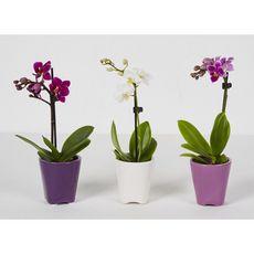 Fleurs - Orchidée 1 branche pot en céramique