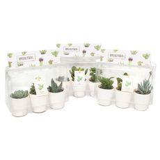 Plantes - Succulentes mix trio céramique blanche