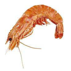 LA MARÉE DU JOUR Très grosse crevette entière cuite réfrigérée sauvage 100g