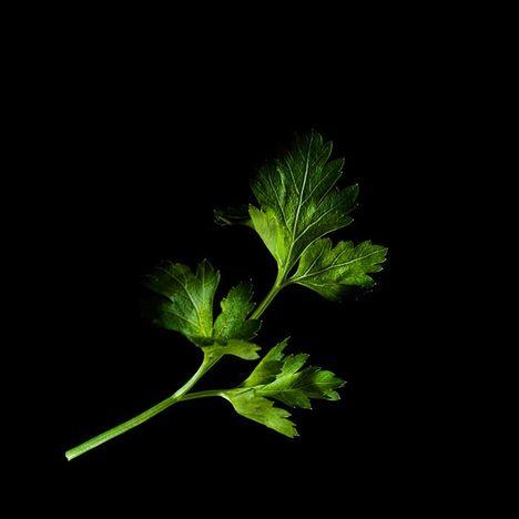 PLANTUI Capsule persil pour jardin d'intérieur