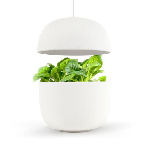 PLANTUI Jardin d'intérieur connecté - PLANTUI - Blanc