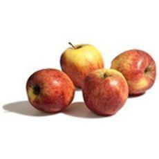 SANS MARQUE Pommes Gala Tenroy barquette 6 pièces