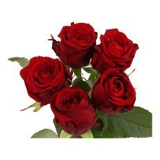 bouquet 5 roses rouges 50cm