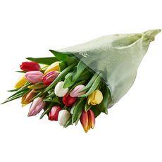 Bouquet de 15 tulipes arlequin et housse à offrir 1 bouquet