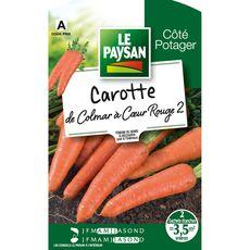Le Paysan Semences potagères carotte de Colmar x2