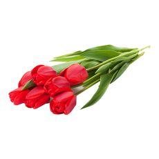 tulipes rouges tige x10 +5offertes