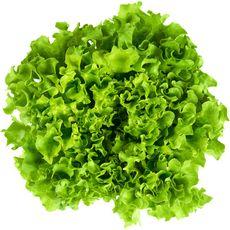 Salade batavia 1 pièce