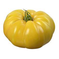 Tomate ancienne côtelée jaune pièce