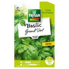 LE PAYSAN Semence potagère basilic grand vert x1 1 pièce